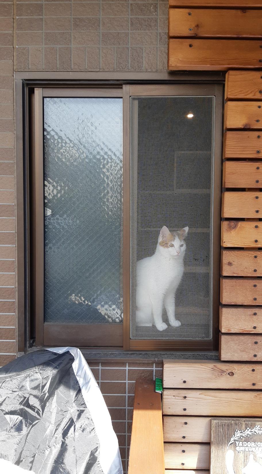 施工前の引違い窓